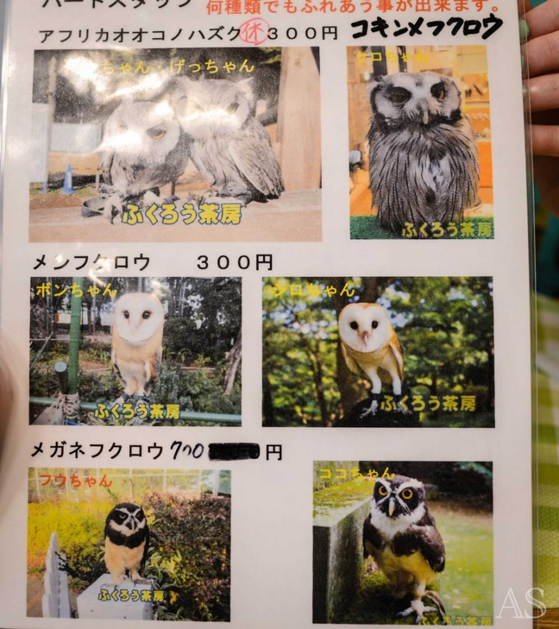 Prices of the owl holding ( varies from species to species)