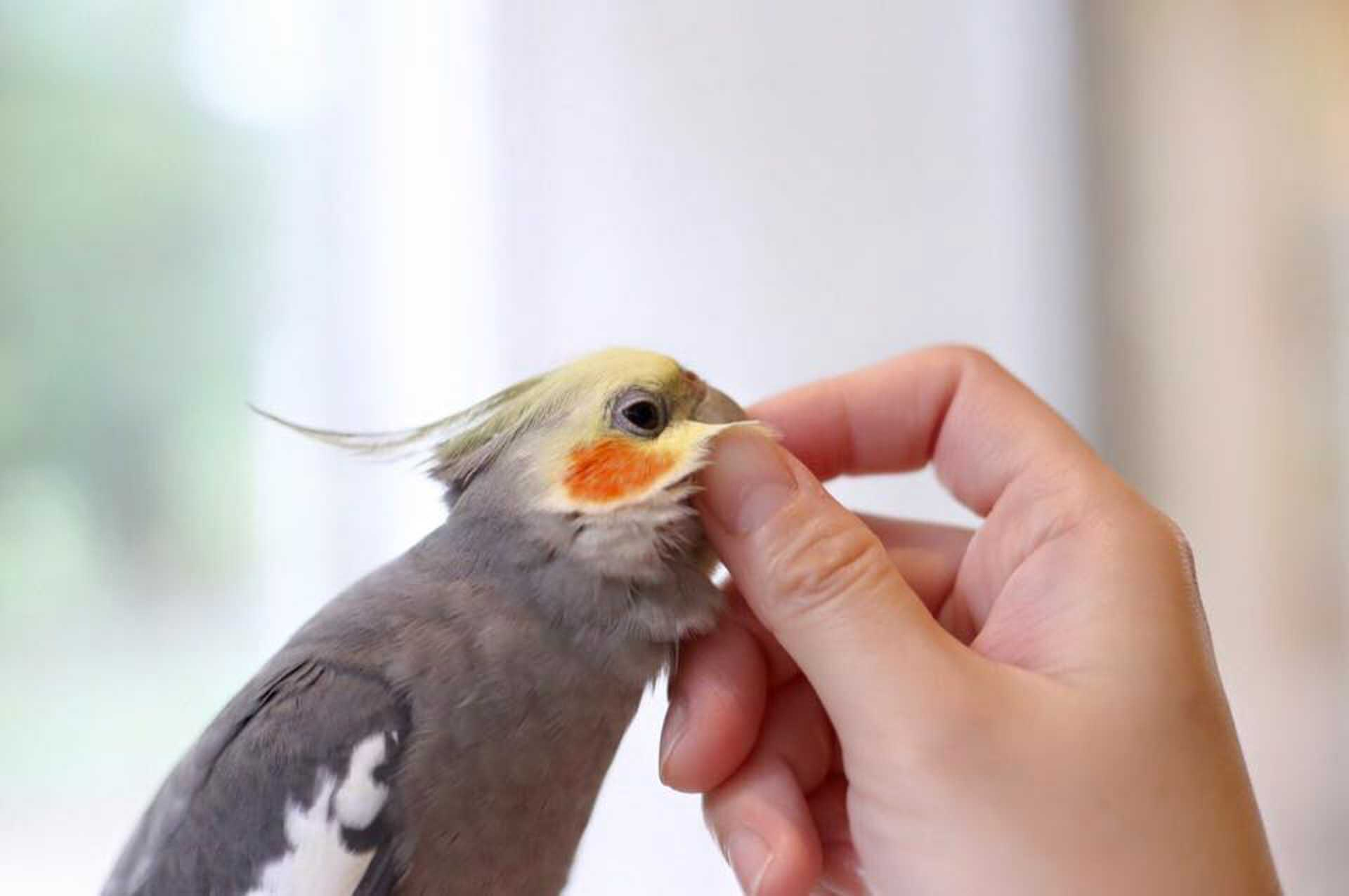 Your chance to get upclose with the birds!