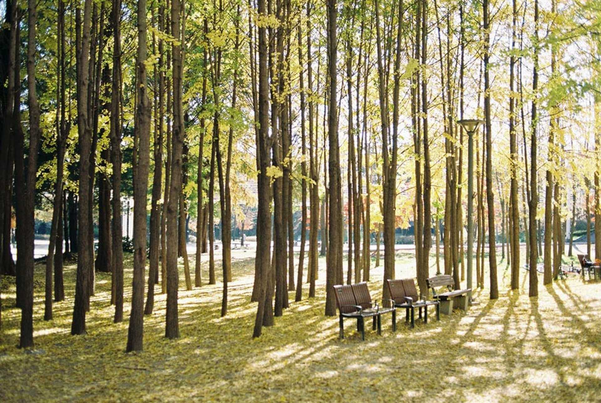seoul-forest