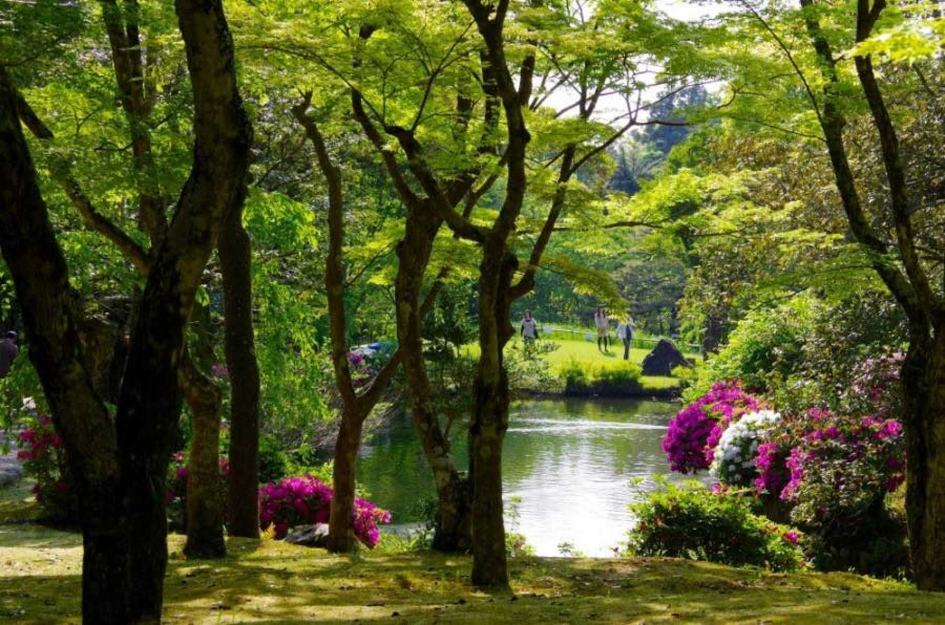 Go for a sun-kissed stroll at Manyo Botanical Garden