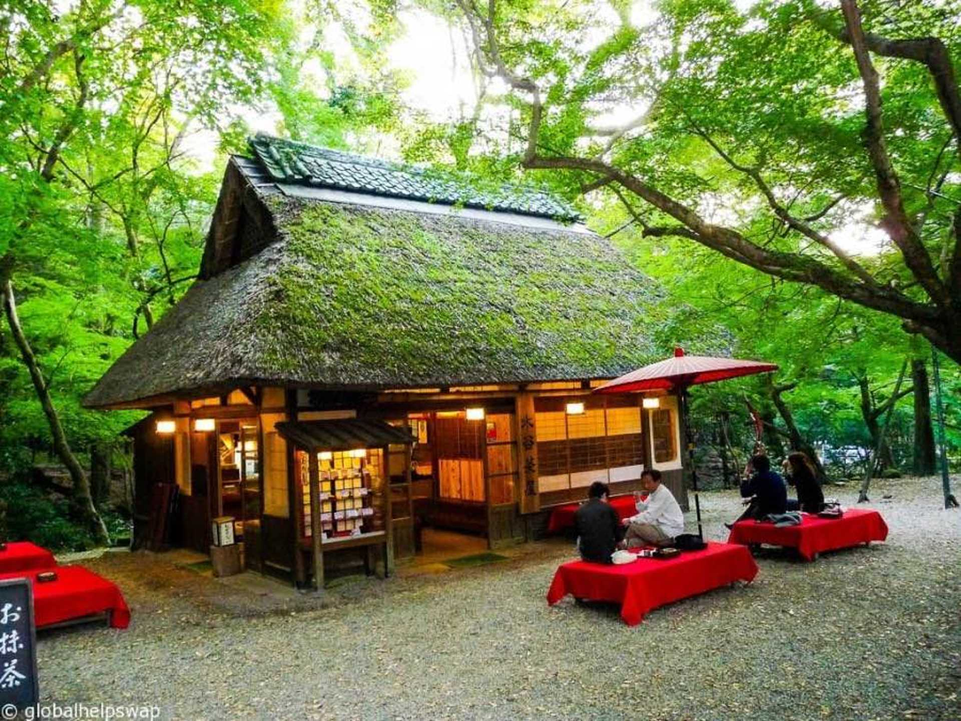 Chill with the locals at Mount Wakakusayama