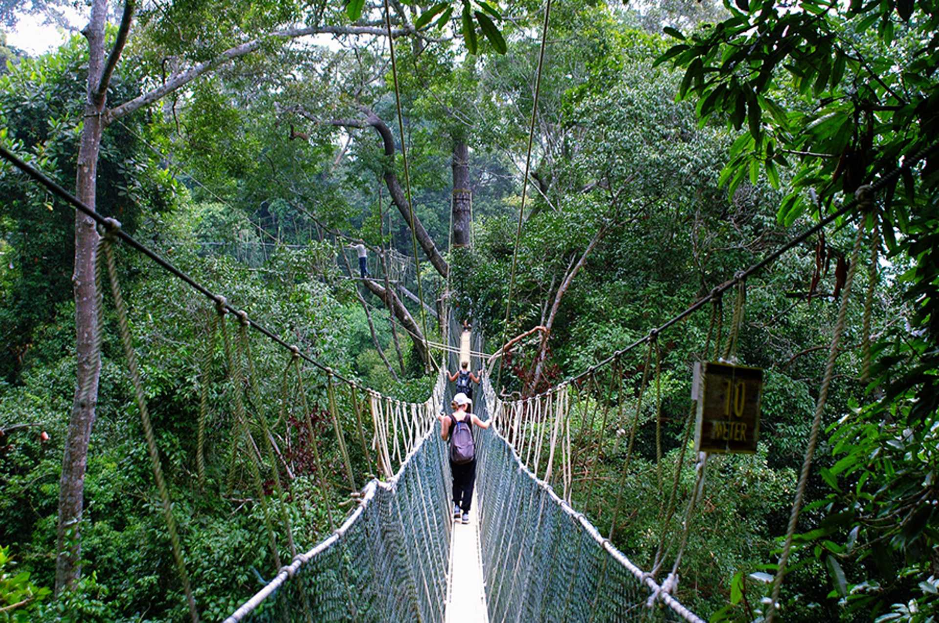 21 - The canopy walk is a treat for nature escapists