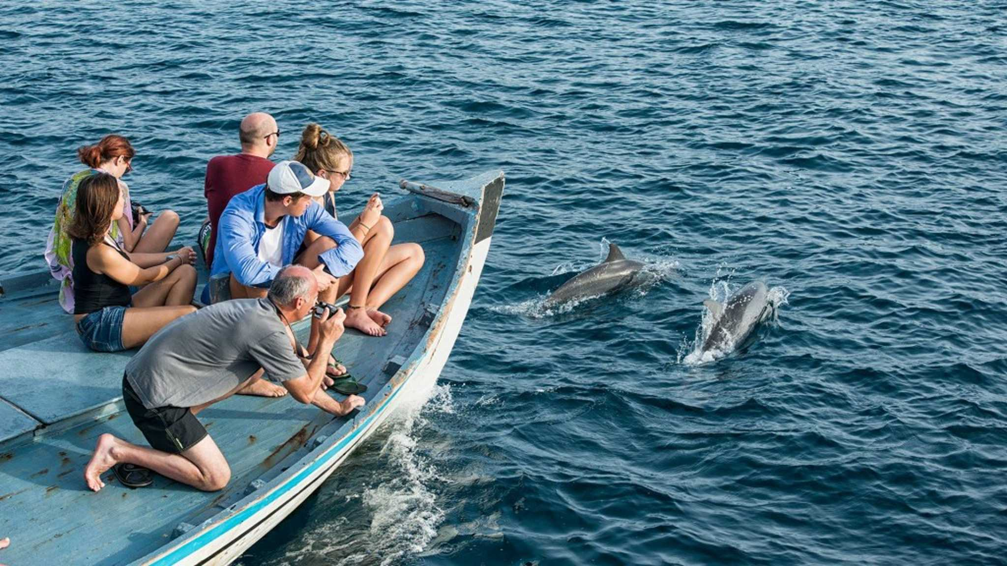 The Barefoot Eco Hotel Dolphin Tours