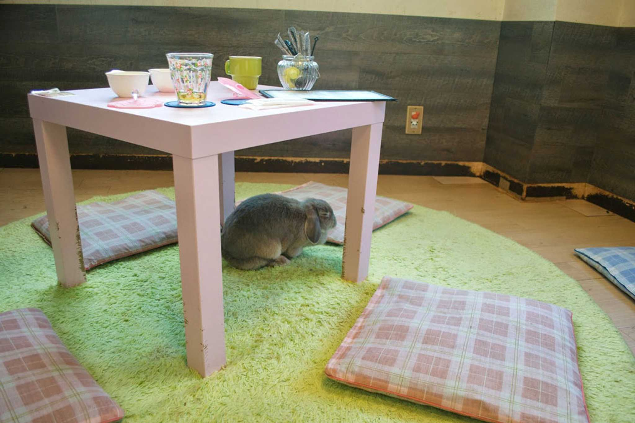 Cute bunnies that entertain you while you are sipping your coffee in a cosy ambience.