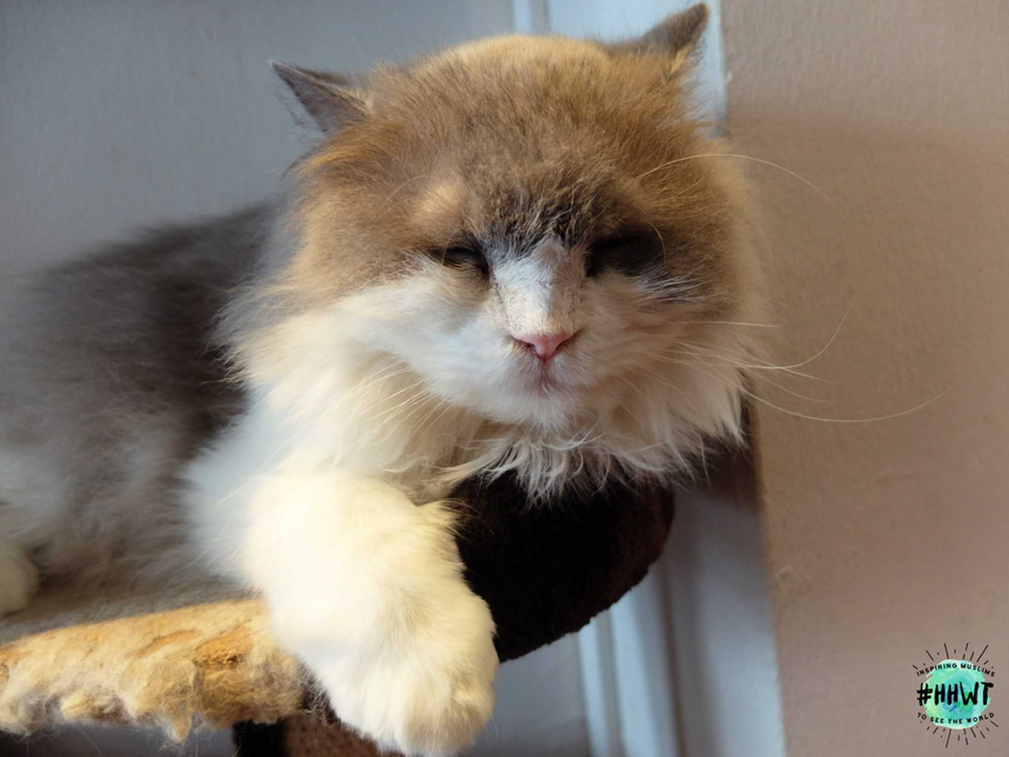 company-of-cats-belle