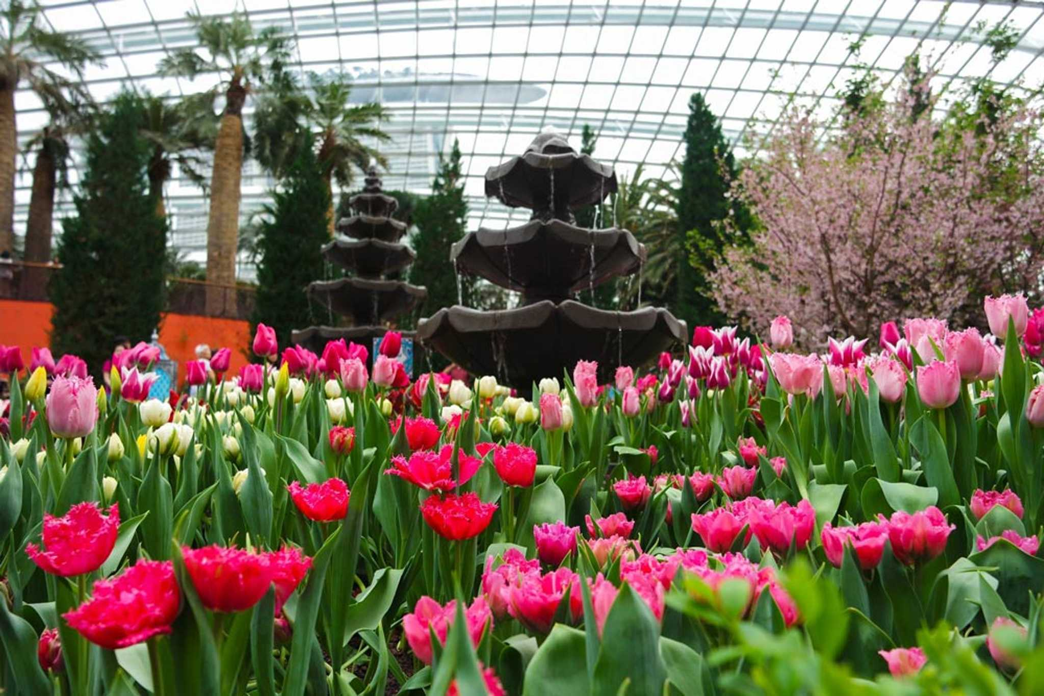 Gardens-by-the-bay-Singapore-Tulips